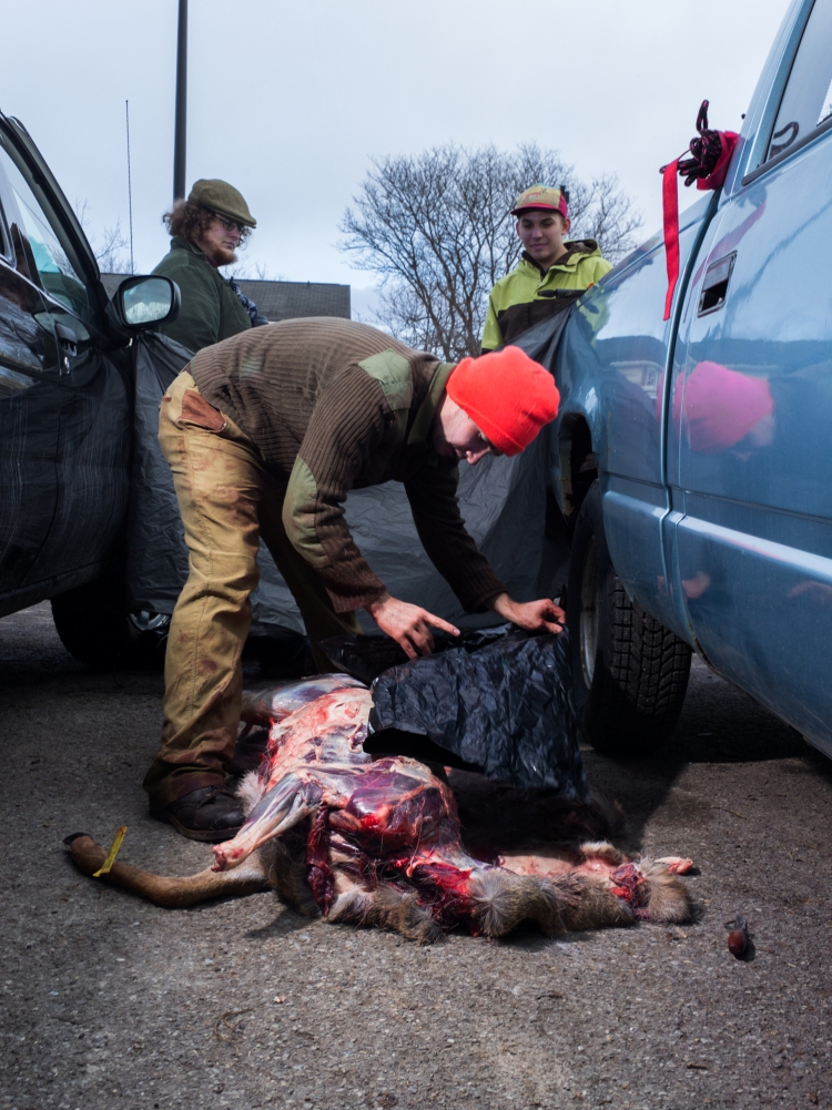 Jonathan Foster (center) finishes field dressing a doe in a parking lot of the Perkins Green apartments at the Rochester Institute of Technology campus while two his roommates, Liam Storrings (left) and Taylor Schultz (right) watch. Jonathan moved to the parking lot and set up a tarp between a friend's car and his own to shield the process after first attempting to hang the doe from a tree in Perkins and being told by campus safety that he had to move.