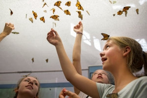 From left to right: Laura Dell, Michelle Shaud, and Laura Haney use q-tips to feed nectar to various types of butterflies, inside the Butterfly Walkthrough-exhibit, on Sunday, August 31, 2014 during The Great New York State Fair in Solvay, N.Y.